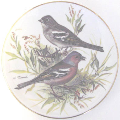 Buchfink - Chaffinch - by Ursula Band - Plate Front