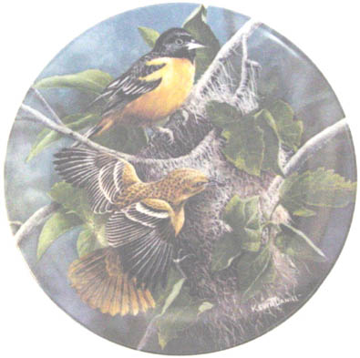 The Baltimore Oriole - by Kevin Daniel - Plate Front